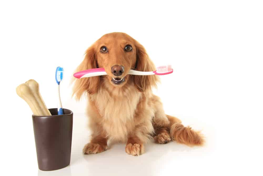 Dog-and-tooth-brush